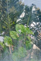 Plants behind a window pane