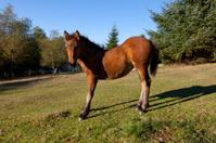 horse in urkiola meadows