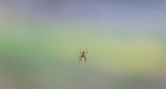Colorfield spider
