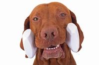 dog  holding dumbbell