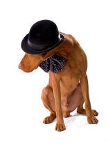 sod wearing hat