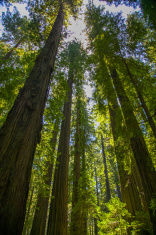 Humbodlt Redwoods State Park, California