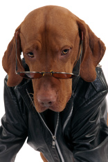 dog with leather jacket