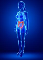 Female large intestine anatomy