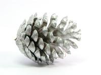 silver pinecone