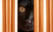 Sneaky Black Cat Hiding Behind Wood Furniture