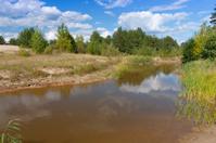 nice summer scene on lake