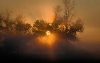Sunrise through fog and trees