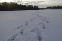 trail on the ice