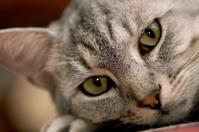 Contemplative Cat