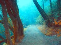 Redwood Underwater