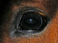 Horse´s eye