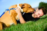 Loving Dog - Pit Bull