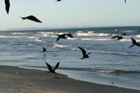 Birds catching food on the beach