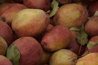 Pear Harvest