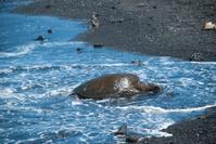 Turtle Crawling on Shore