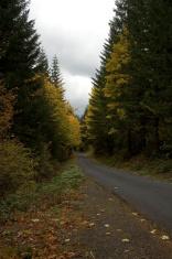 Autumn roadway