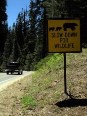 Animal (Bear) Warning Sign