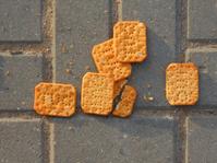 cracker on asphalt