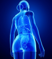 Xray digestive system of female body