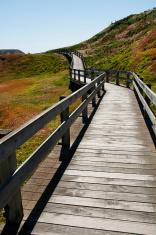 Boardwalk on Phillip Island