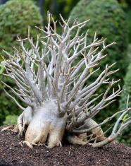 unusual bonsai tree