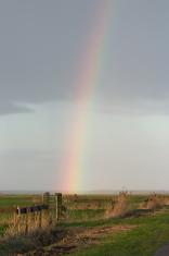 Rainbow in Dutch polder (Eemnes, the Netherlands)