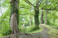 St Stephans Green Park, Dublin