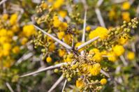Flora of Souss Masa National Park
