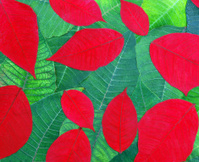 Poinsettia leaves