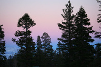 sunset on pines