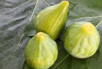 Figs on fig leaf background