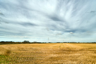 Field plains landscape
