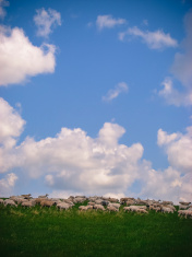 Prairie and skyscape