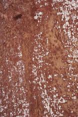 Worn Wooden Background