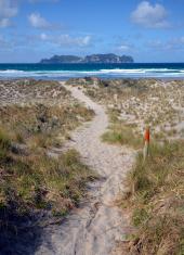 Sand Dunes, Great Barrier Island New Zealand