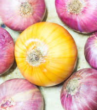Sven onions