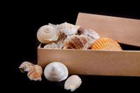 Box and shells