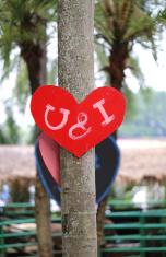 heart on the tree