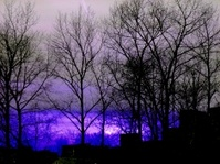 Evening trees and houses in the purple background