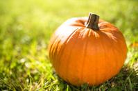 halloween pumpkin on the grass field