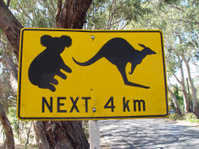 Koala and kangaroo sign