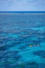 Sole Snorkeler