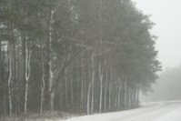 Snowy Trees at the Roadside