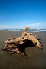 beach of  boccasette