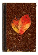 Autumnal Still Life - Vanitas Concept