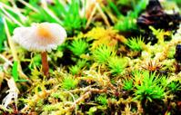 Macro of Tiny mushroom