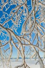 branches givrée
