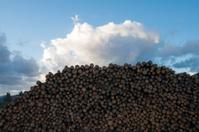 Stumps pile