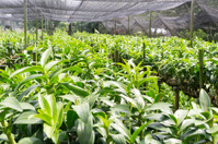 Orchid greehouse and garden nursery